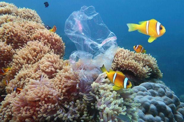 Koraalriffen trekken weg van de evenaar