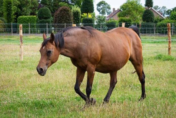 """Familie overspoeld met klachten door laattijdige ophaling overleden paard: """"We zijn ingestort"""""""