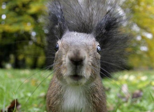 Attaques répétées d'écureuils agressifs à New York