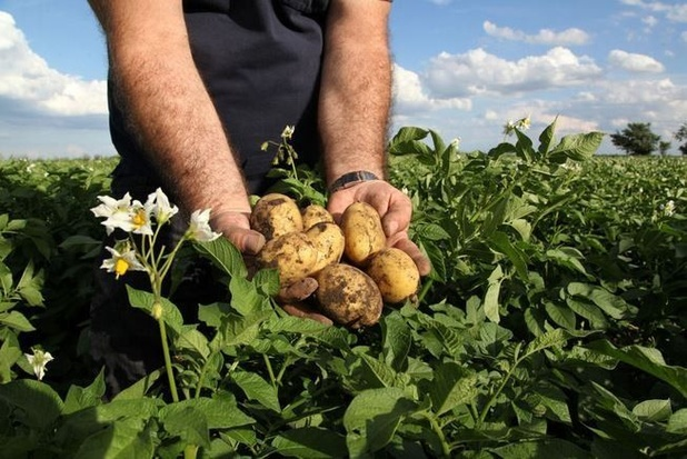 En Flandre, le fisc dans les patates