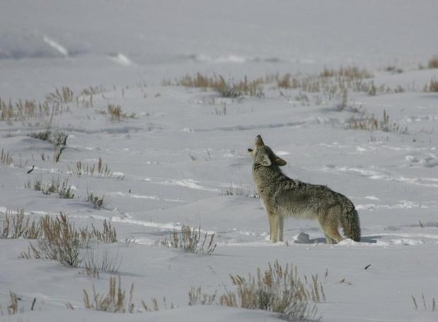 Wat we kunnen leren van de wildernis