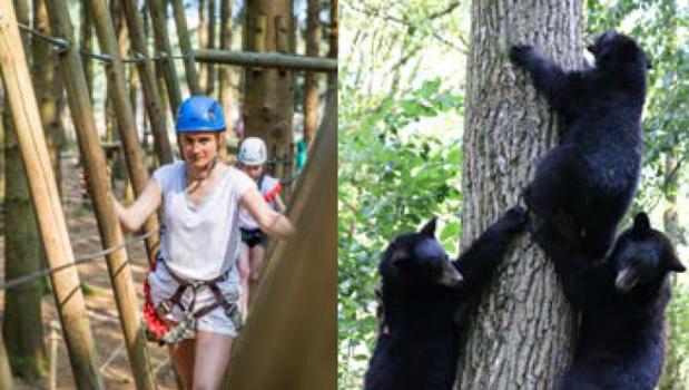 Forestia : aventures au coeur de la forêt !