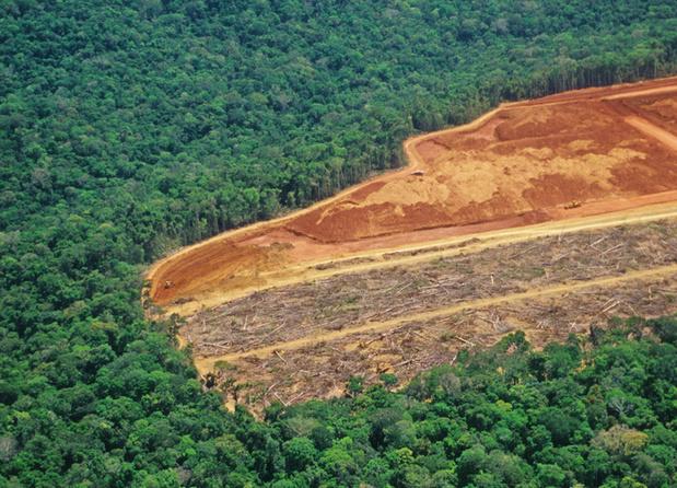 'Business as usual is geen optie meer: we moeten de populatiegroei beperken en de natuur herstellen'