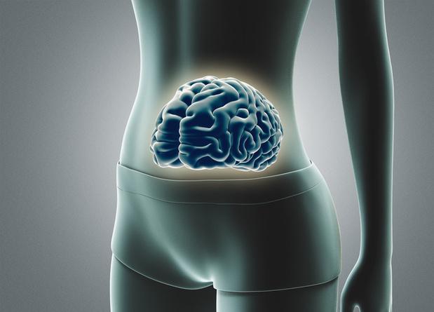 Onze darmen, een tweede brein