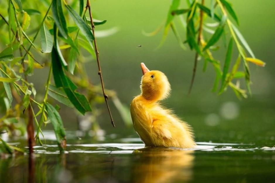Les plus belles photos d'oiseaux de l'année (finalistes)