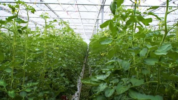 1 op de 5 bedrijven in zorg en tuinbouw zet jobstudenten in tijdens paasvakantie
