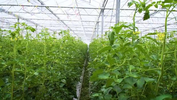 Forte diminution des prix des produits horticoles en avril