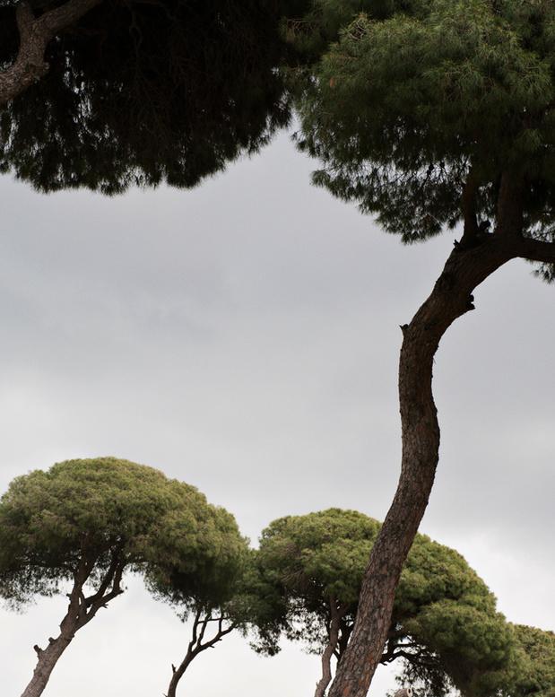 L'oeuvre de la semaine: Les pins de Beyrouth