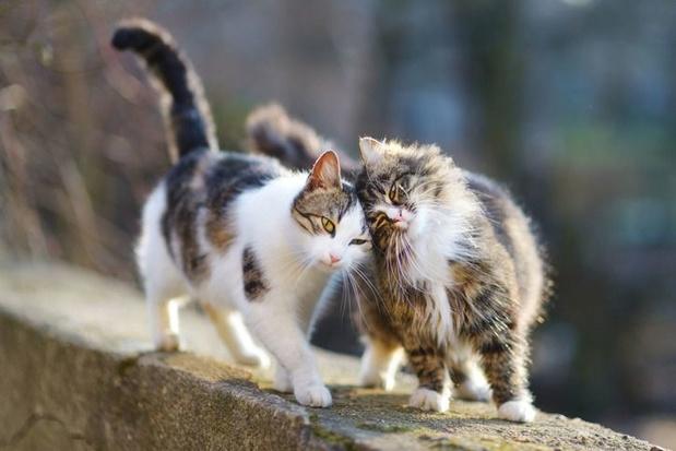 'Huiskatten hebben een bescheiden effect op vogelpopulaties'