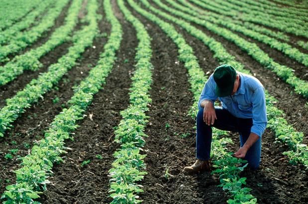 Boerenorganisaties zullen meestappen in klimaatmars: 'Wij zijn deel van de oplossing'