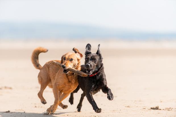 De hondenverzekering: kwispelend door het leven