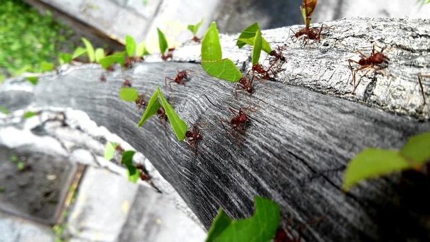Derde nationale Insectenweek benadrukt het nut van insecten