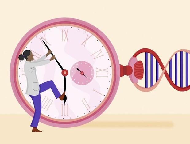 Le traitement ARV freine l'accélération de l'horloge biologique des patients VIH