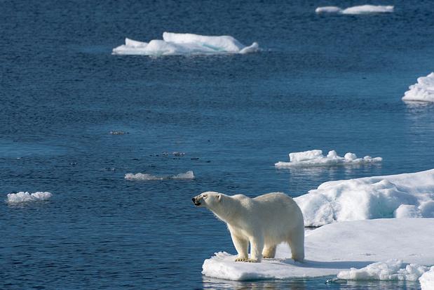 Des ours polaires près d'un village russe