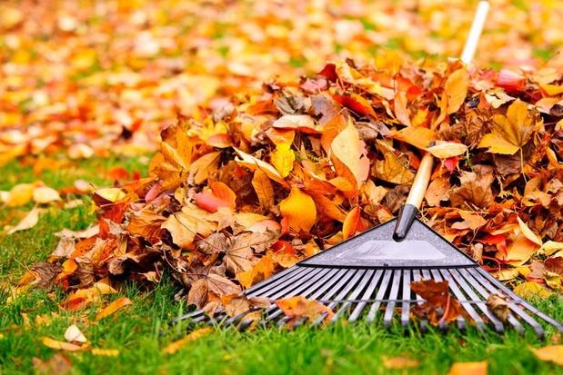 Afgevallen bladeren: opruimen of lekker laten liggen?