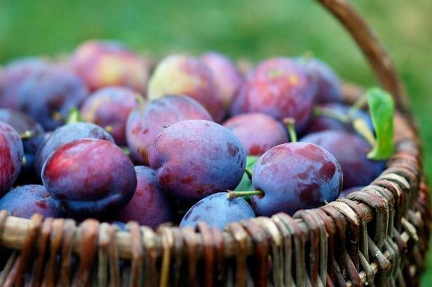 Pruimen: vezelrijk zomerfruit