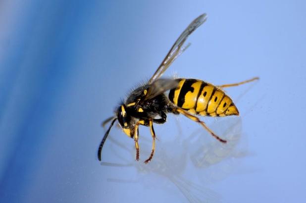 Na zachte winter en mooi meer: zomer met veel insecten op komst
