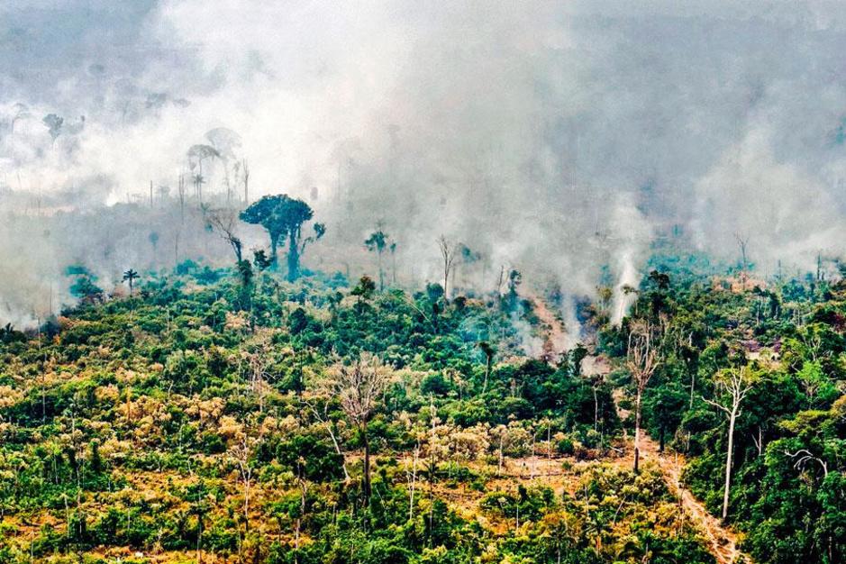 Carlos Nobre wil het Amazonewoud redden: 'Het is tijd voor agressieve maatregelen'