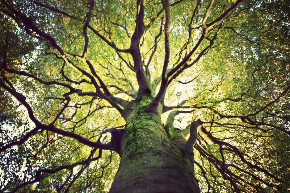 Quel est le plus bel arbre d'Europe ?