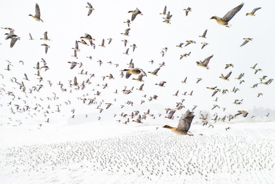 Drone Photo Awards: une sélection des photos gagnantes