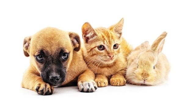 Malade à cause de votre chien, chat ou lapin ?