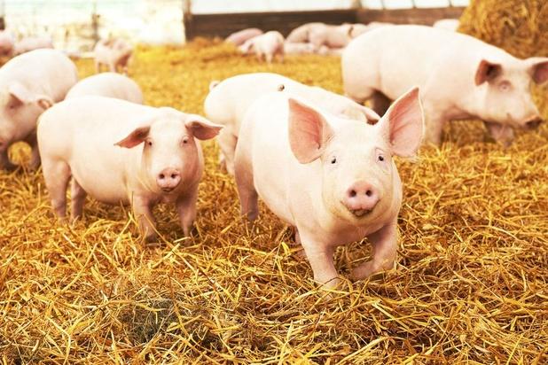 Mission économique en Chine: les producteurs de viande porcine frustrés par l'embargo