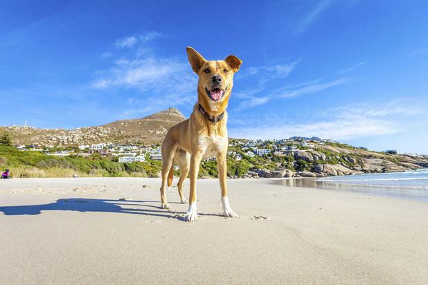 5 activités à faire avec votre chien en vacances