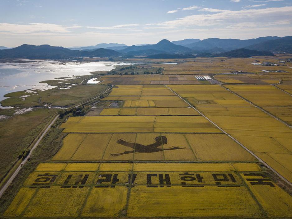 En images: Les rizières de Corée du Sud deviennent des oeuvres d'art