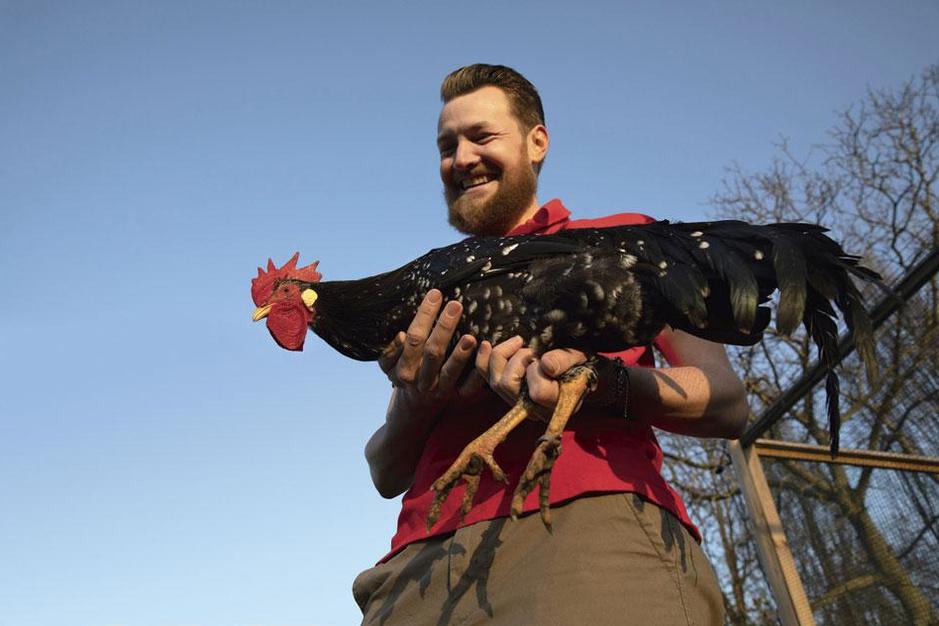 De meest bekeken Vlaamse YouTube-video ooit gaat over kippen. Precies, ja. Kippen