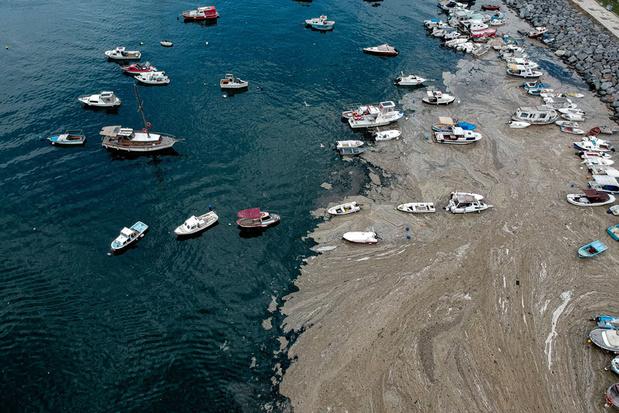 """Les côtes de la Turquie envahies par de la """"morve de mer"""""""