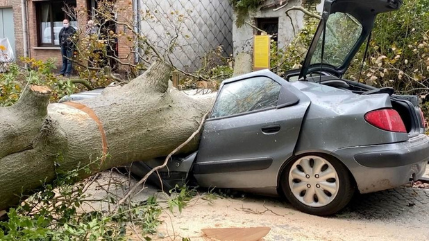 Enorme boom verplettert auto in Brugge