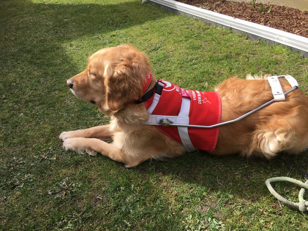 Heidi en hond Odette steunen Vrienden der Blinden