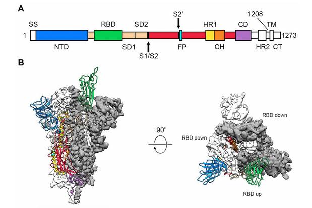 COVID-19: na het genoom een moleculaire kaart