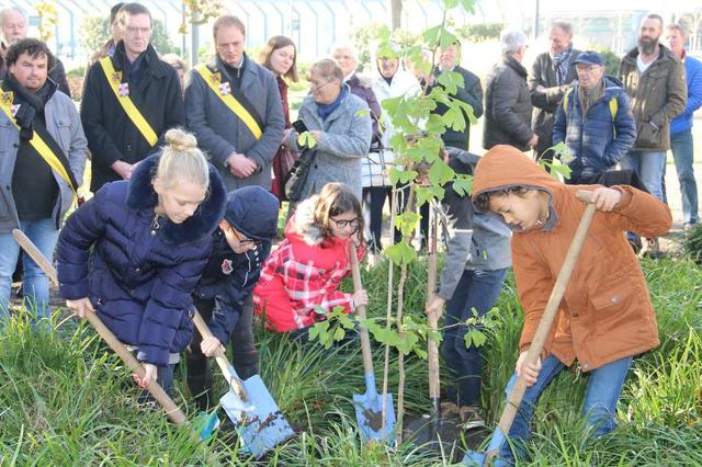 Aanplant van vredesbomen moet jaarlijkse traditie worden in Ieper