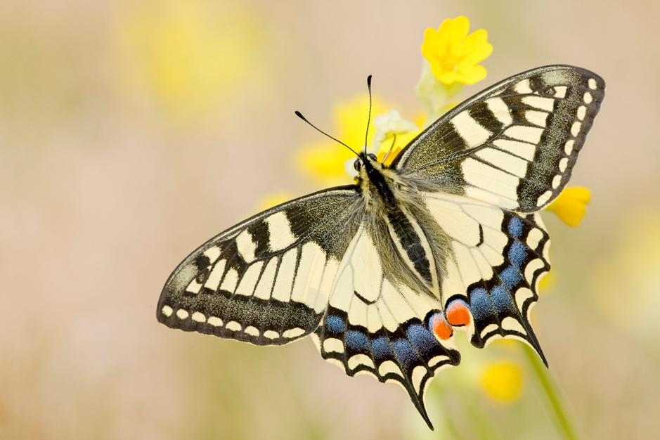Beestenboel: beterschap op komst voor de koninginnenpage