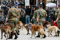 La Défense songe à utiliser des chiens pour détecter le coronavirus