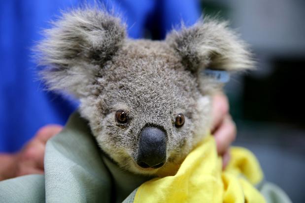 'Waarom geven we meer om koala's dan om kippen?'