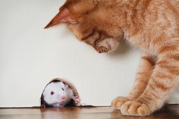Muizen met karakter worden minder ziek