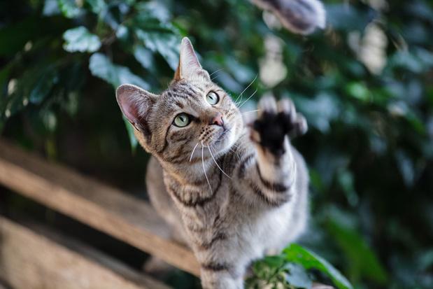 'Gelukkig hebben katten een langere levenscyclus dan smartphones'