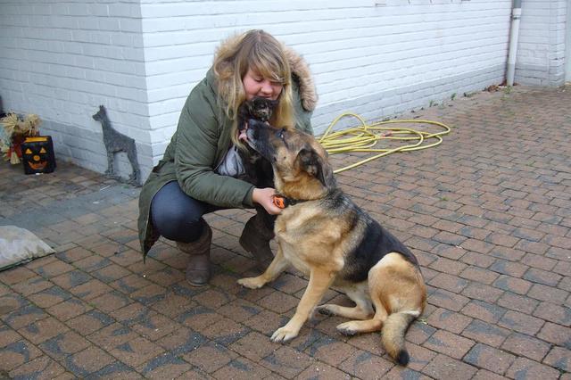 Wie probeert honden en katten te vergiftigen in het Villapark van Waregem? - Krant van Westvlaanderen
