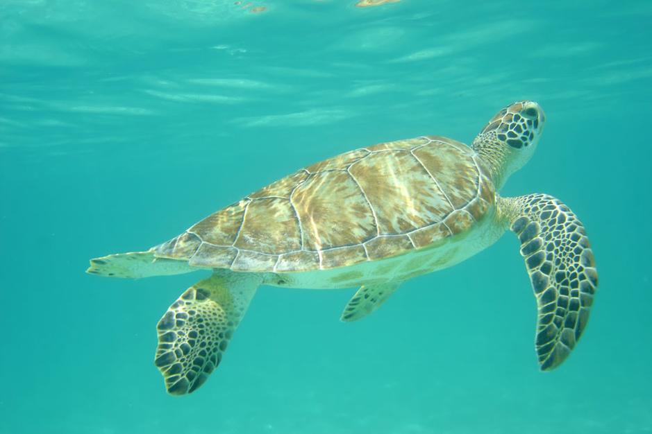 Beestenboel: beterschap op komst voor de lederschildpad