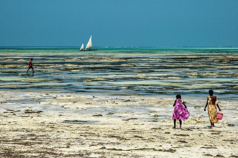 Sur la côte est de Zanzibar, la culture des algues fait la fortune de l'industrie cosmétique ou agroalimentaire et assure un maigre revenu aux femmes. Tandis que les hommes sont à la pêche., PHILIPPE BERKENBAUM
