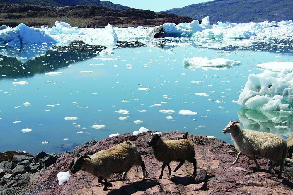 Le site se caractérise par l'agriculture nordique et inuite en bordure de la calotte glaciaire. Il témoigne des histoires culturelles paléo-esquimaudes et des migrations de fermiers nordiques, de chasseurs inuits et des communautés inuits qui se sont développées à partir de la fin du XVIIIe siècle., Unescon, Reuters, Wikipedia