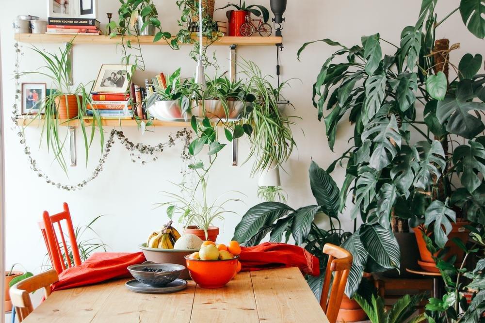 Un intérieur green scandinave, Brina Blum via Unsplach