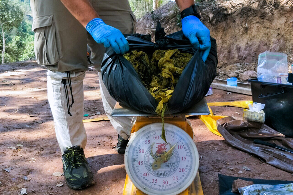 Contenu de l'estomac de l'animal, AFP