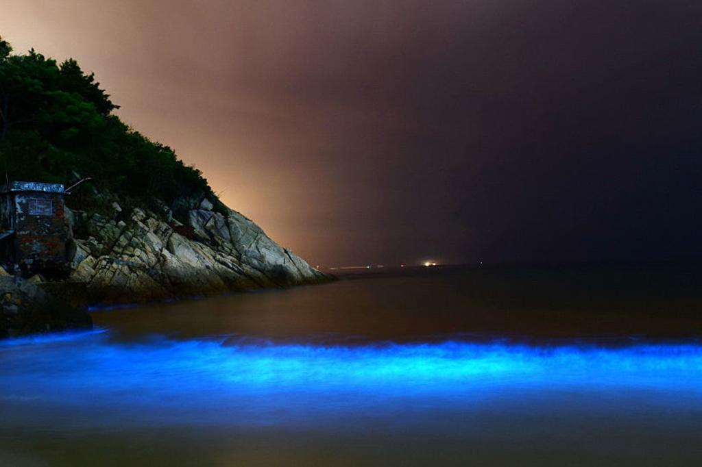Noctiluca geeft licht in het donker, iStock