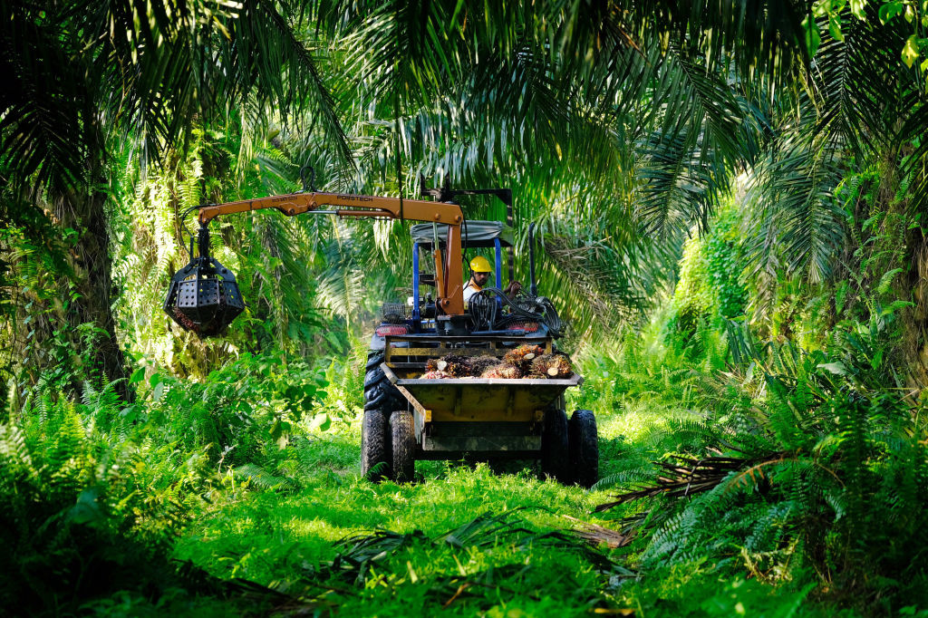 Een arbeider aan het werk op een palmolieplantage, Getty