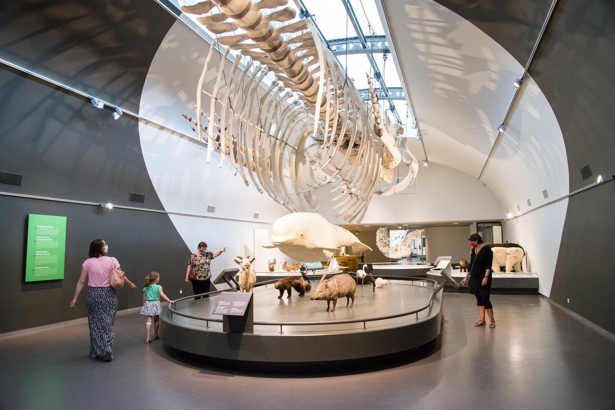 """La partie supérieure de l'expo permanente """"Planète vivante"""" a été aménagée dans les anciennes salles """"Baleines""""., Musée des sciences naturelles."""