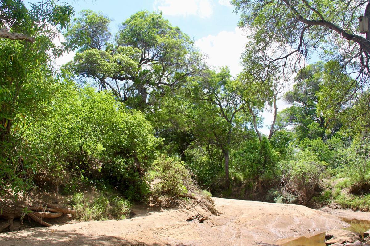 De halfwoestijnregio Caatinga, in Brazilië, ACTP/Pairi Daiza