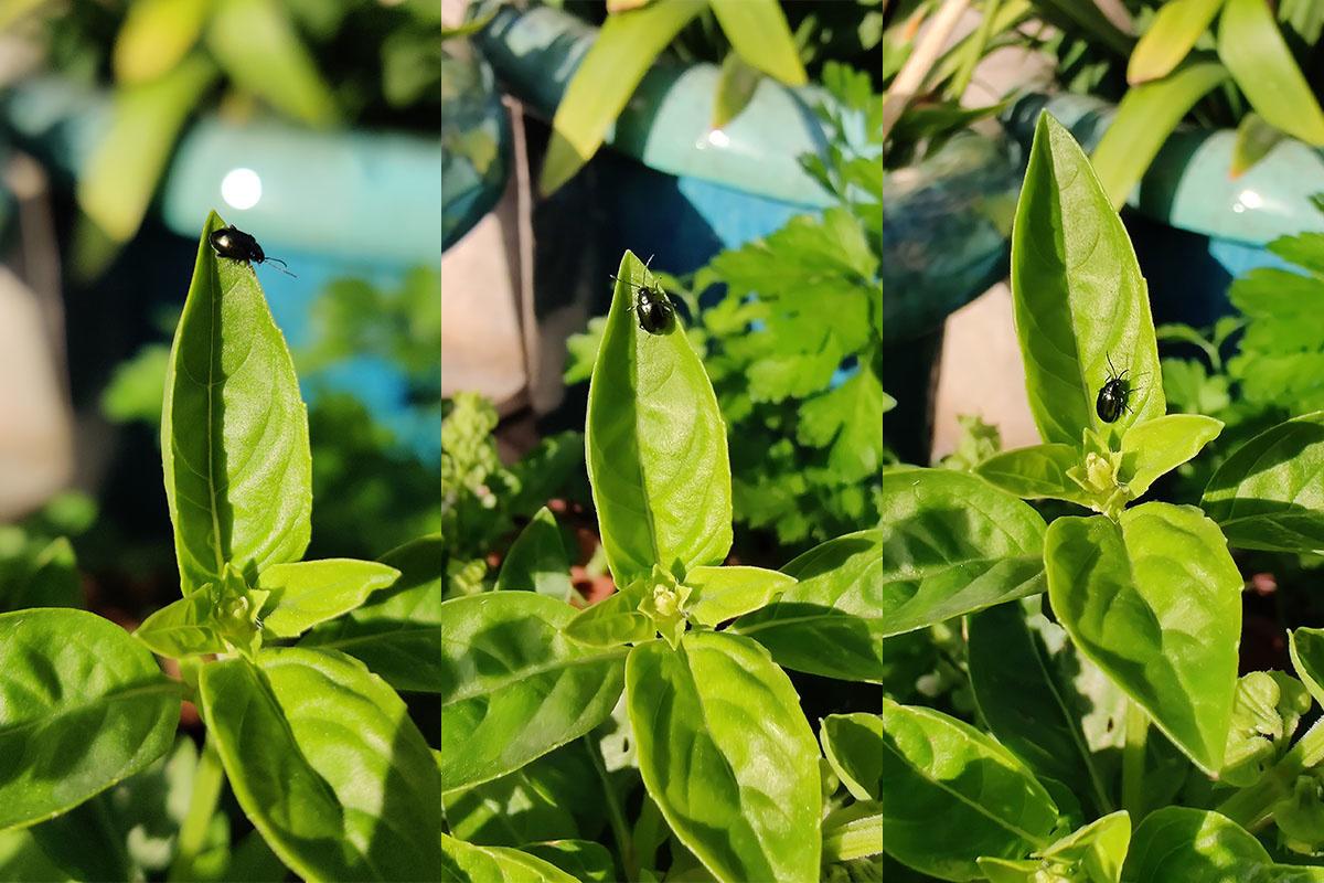 Une photo en mode macro avec l'ancien 7Pro (à gauche), le 7T (au centre) et le 7T Pro (à droite), PVL